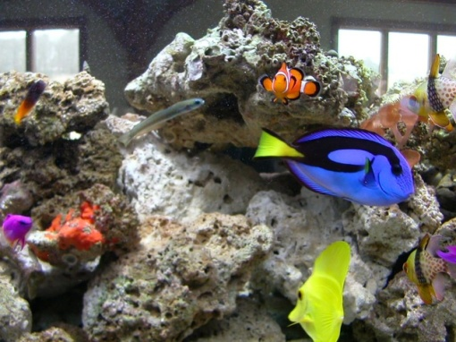 Nemo and the Gang